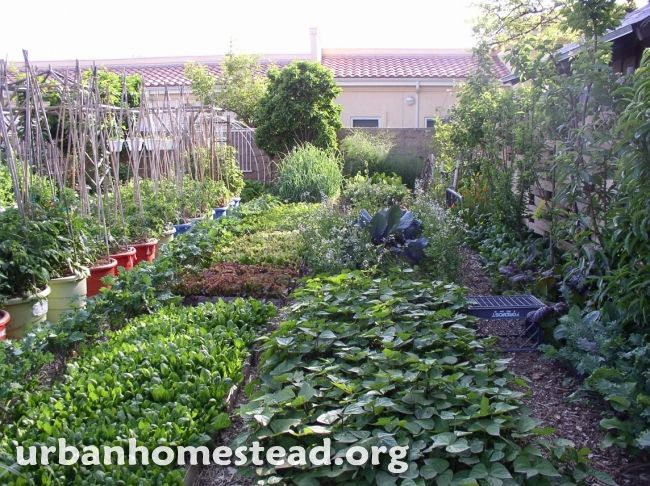 Beautiful backyard farm in the middle of the city. http