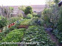 Beautiful backyard farm in the middle of the city. http ...