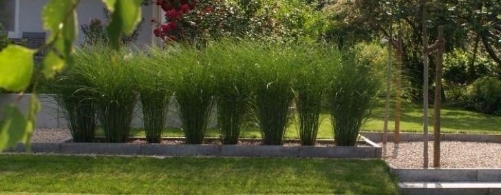 Moderner Garten Mit Grasern | Möbelideen