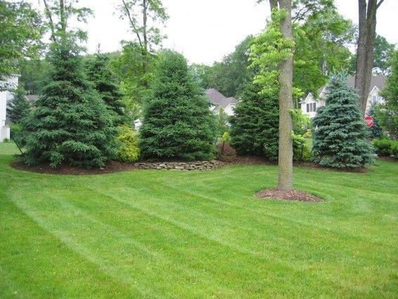 joyful privacy landscaping