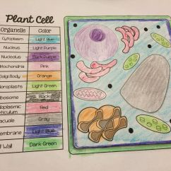 Plant Cell Diagram With Definitions Belimo Actuators Wiring And Animal Organelle Match Color Pages Freebie