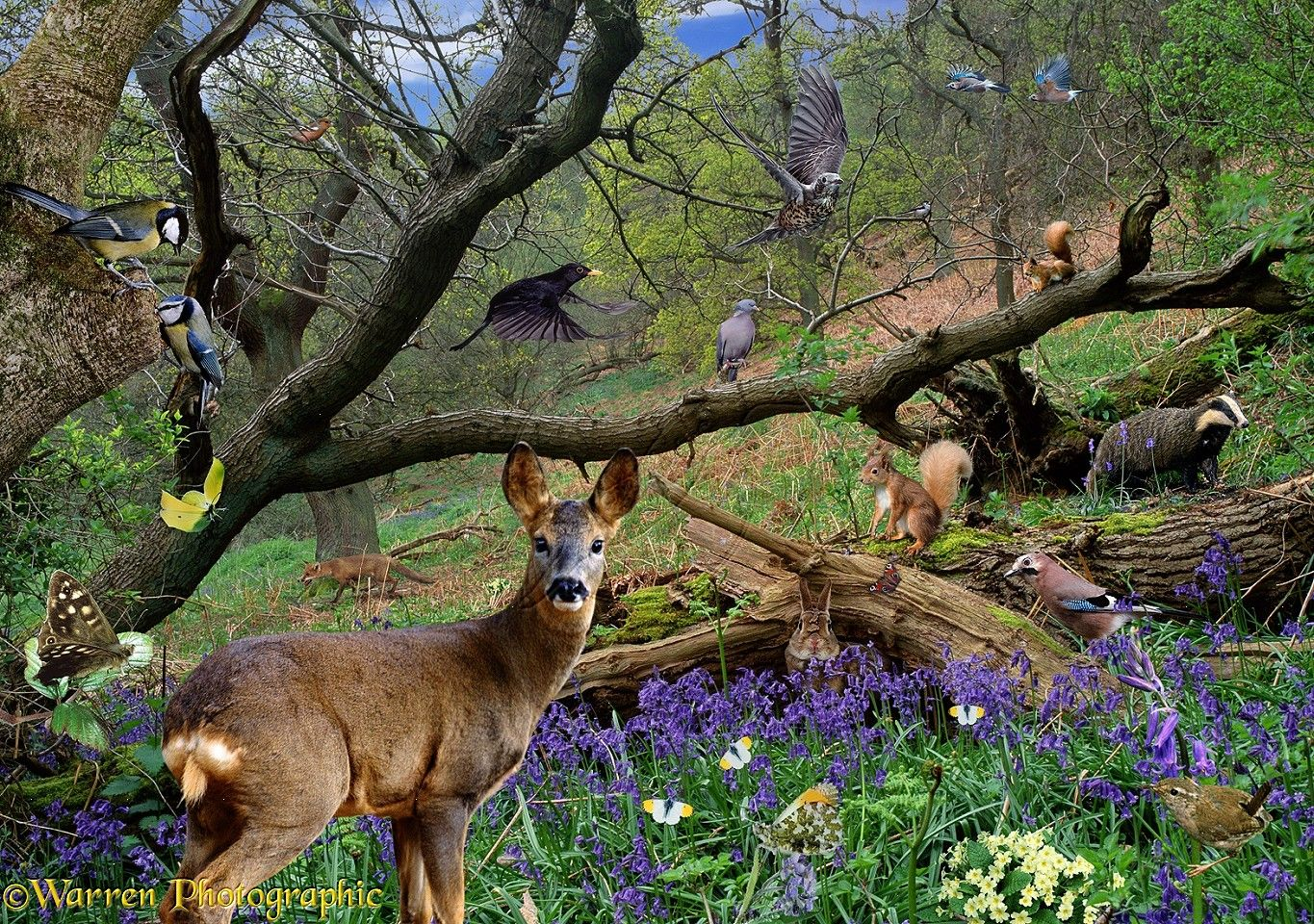 Cute Crisp Wallpapers Photos Of Spring Scenes Spring Scene With Wild Animals