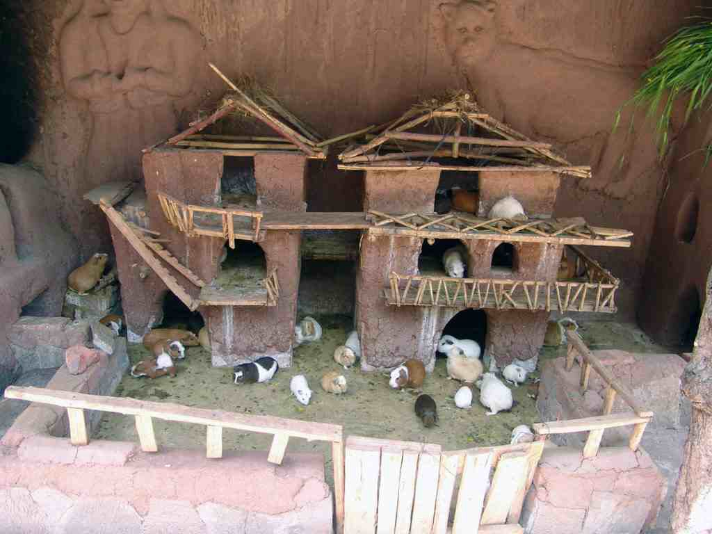 Cool Guinea Pig Cage Pets Pinterest Animal Rabbit Habitat