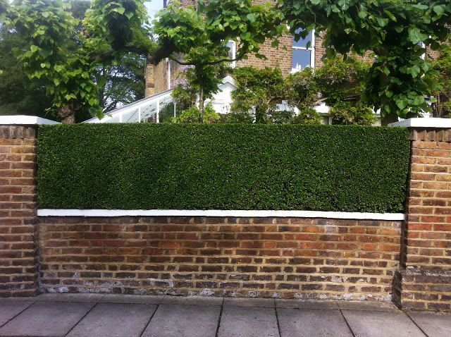 The Privet Hedges At The Front Of The Property Are A