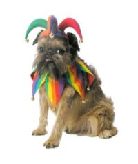 16 Silly Halloween Costumes for Pets | Halloween costumes ...