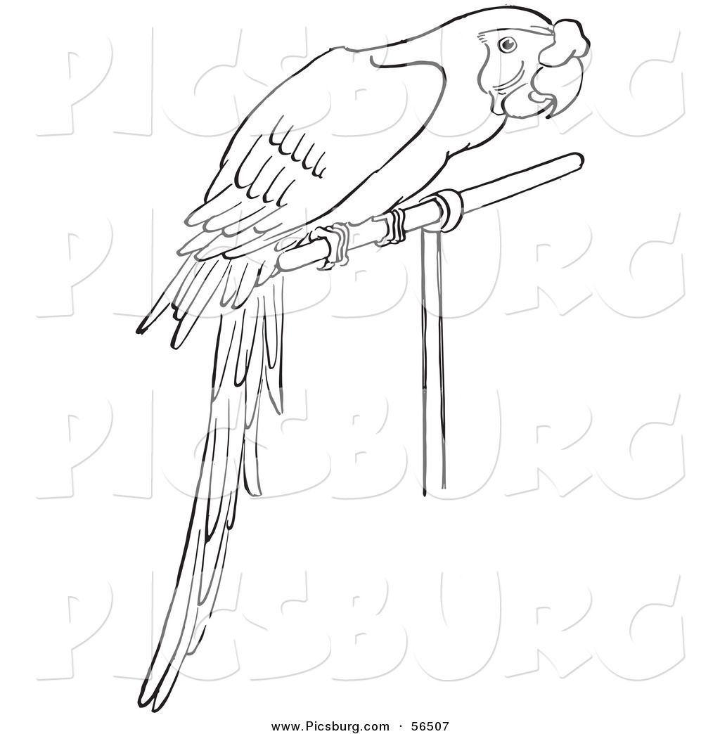 Mccaw Outline Image