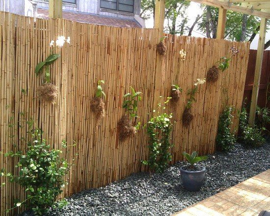 Bambus Sichtschutz Sichtschutz Pinterest Garten