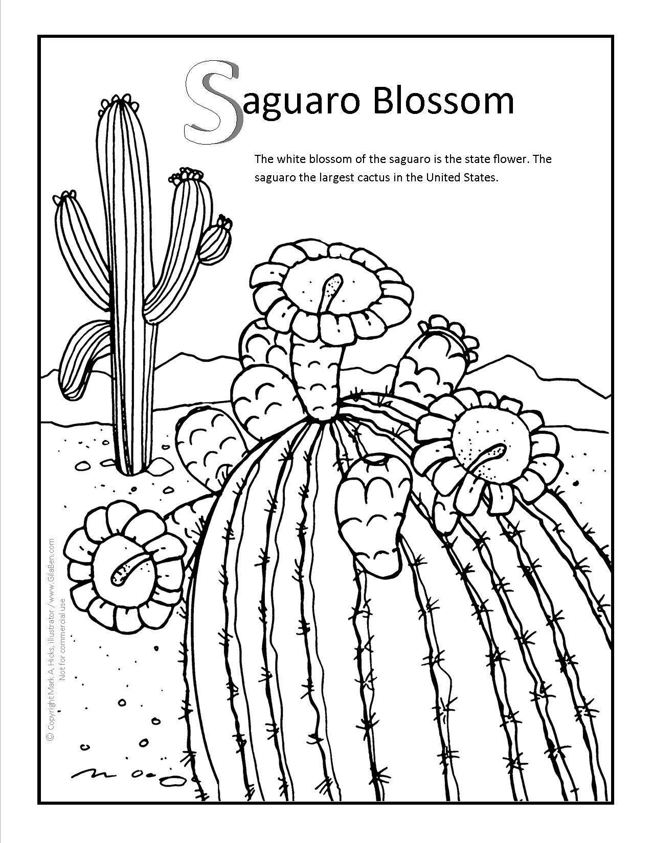 Saguaro Blossom Coloring Page At Gilaben