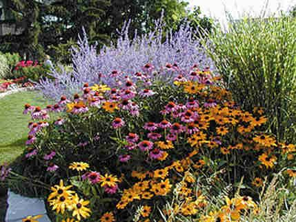 Perennial Grab Bag 10 Mixed Perennials Gardens Perennials And