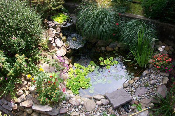 Small Pond Ideas Wildlife Pond Pinterest Gardens Natural