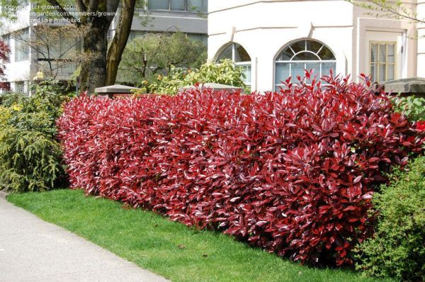 great landscaping bush