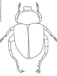 Drawing of dung beetle clearly shows different body parts