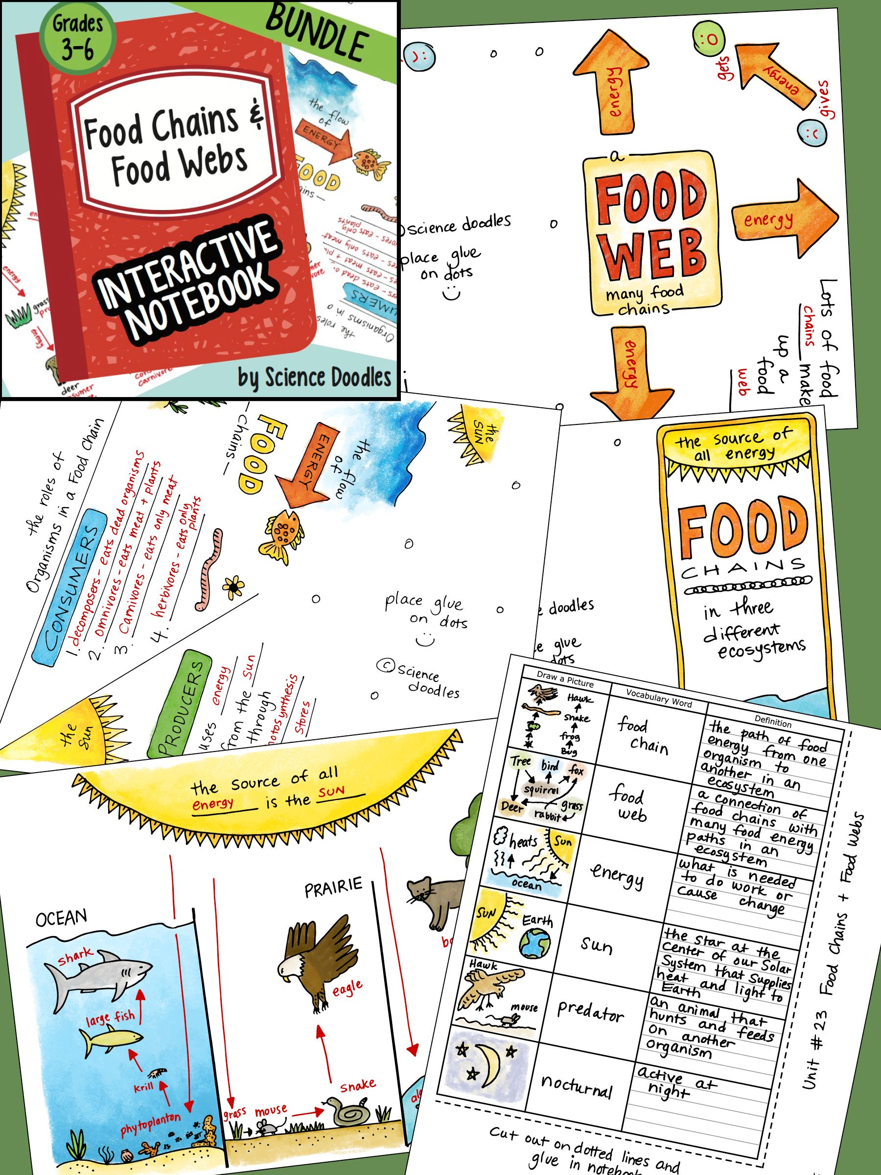 Food Web Worksheet For High School