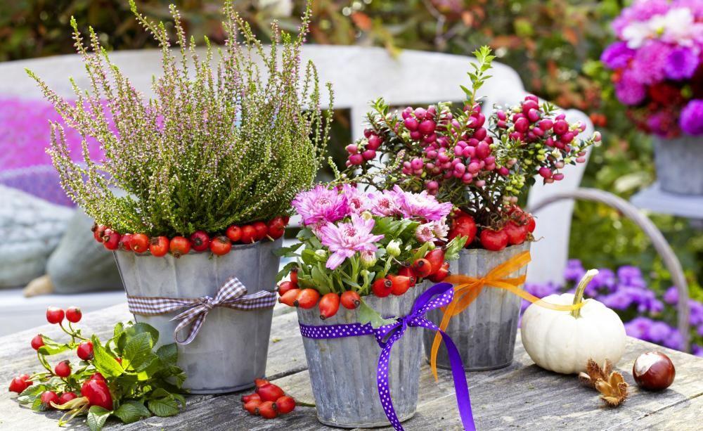Herbst Pflanzen Und Deko Für Balkon Und Terrasse Deko Und
