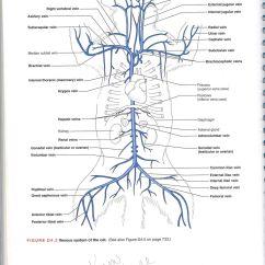 Heart Diagram Quiz Avital 4x03 Remote Start Wiring Cat Arteries Jennifer Kersey E Portfolio Bio211
