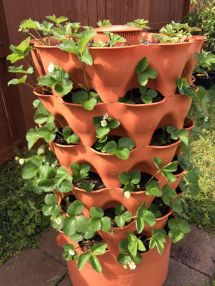Garden Tower 2 Planted With Strawberries Gardening