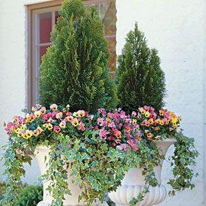 Cascading Geraniums 122 Container Gardening Ideas Gardens