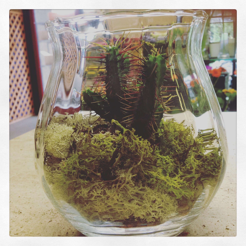Composizione Piante Grasse In Vaso Di Vetro.Composizione Piante Grasse Giardino Giardini D 39autore Tante Idee