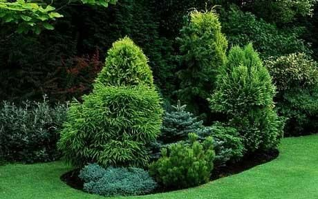 An Island Bed Of Conifers Junipers And Pine Set In A Lawn