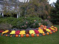 Seasonal landscape display: fall/autumn design with ...