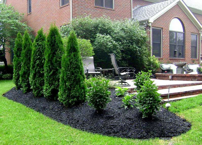 Privacy landscaping plants ideas for outdoor yard garden