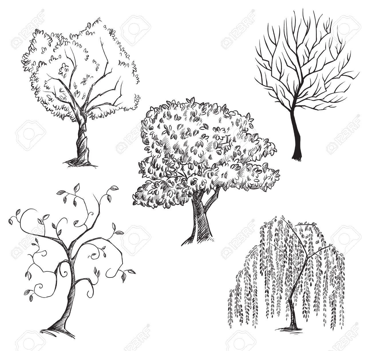 Trees Collection Stock Vector Tree Willow Sketch