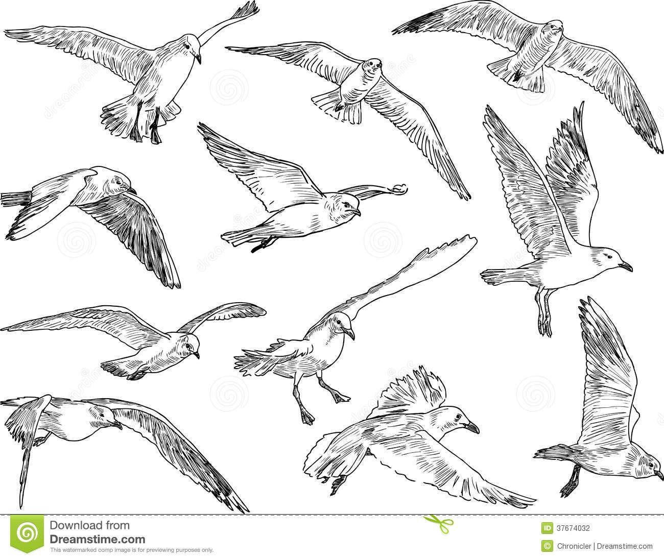 Flock Of Seagulls Stock Photography