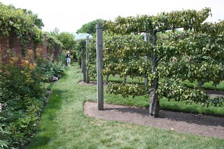 Vegetable And Herb Garden Layout Apple Trees Vegetable And
