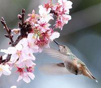 Aratani Japanese Garden at Cal Poly Pomona | Campus Beauty ...