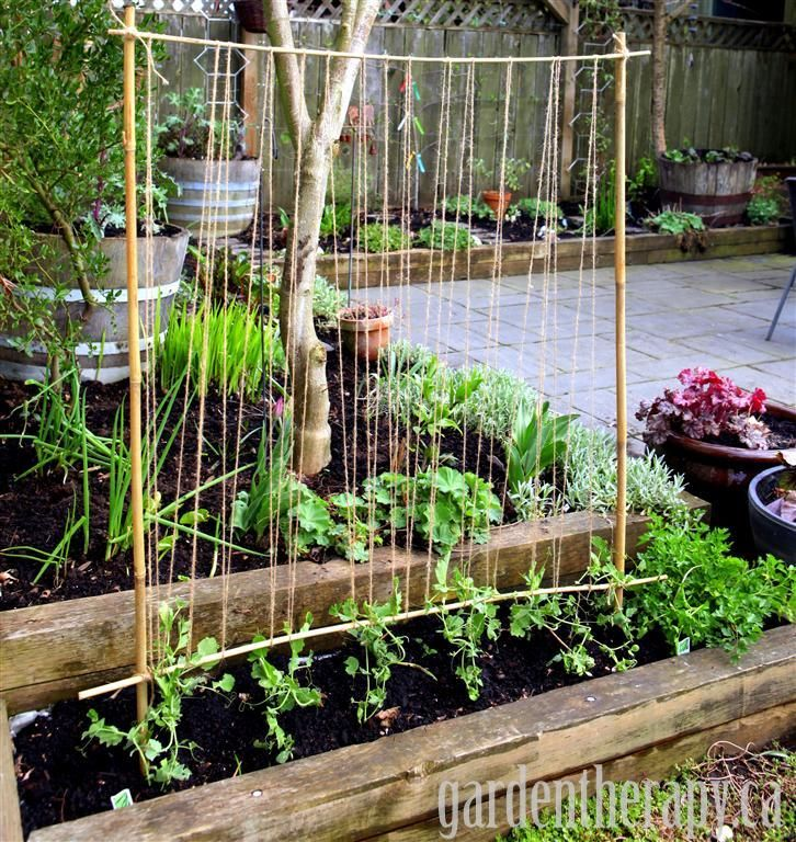 Making A Pea Trellis With Kids Gardens Packs And Diy Trellis