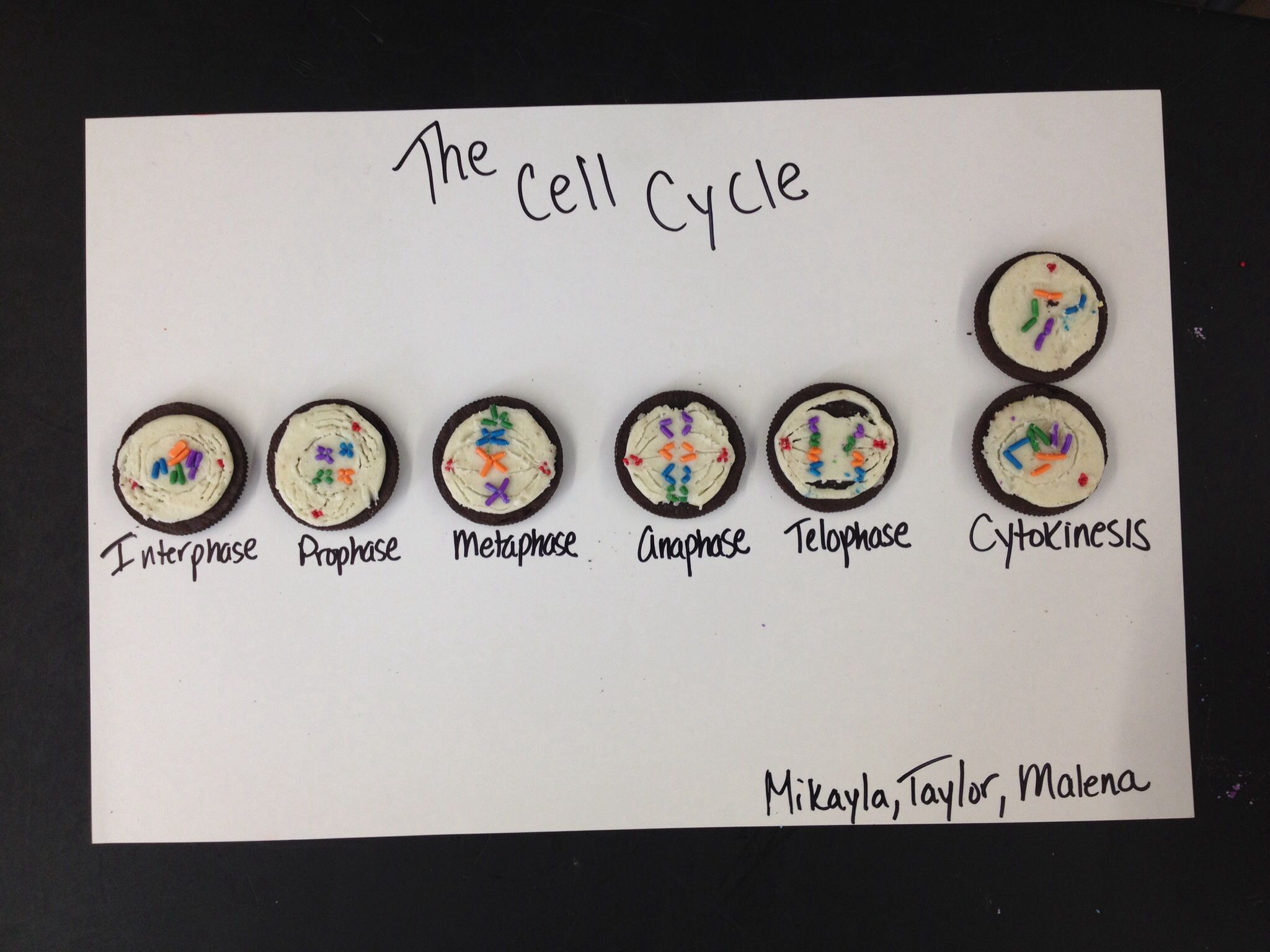 Cell Cycle Mitosis Model Oreo Cookies Sprinkles