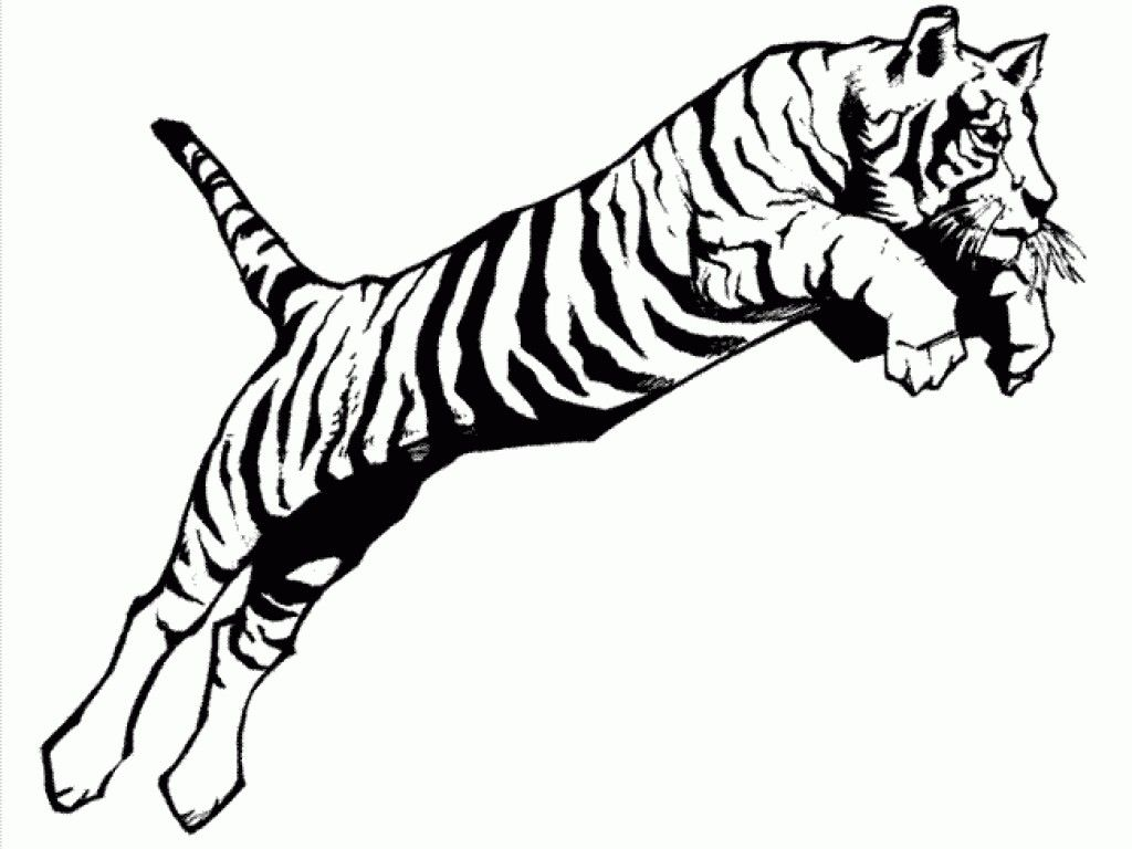 Tiger Color Sheet A Jumping Tiger Coloring Page Print For
