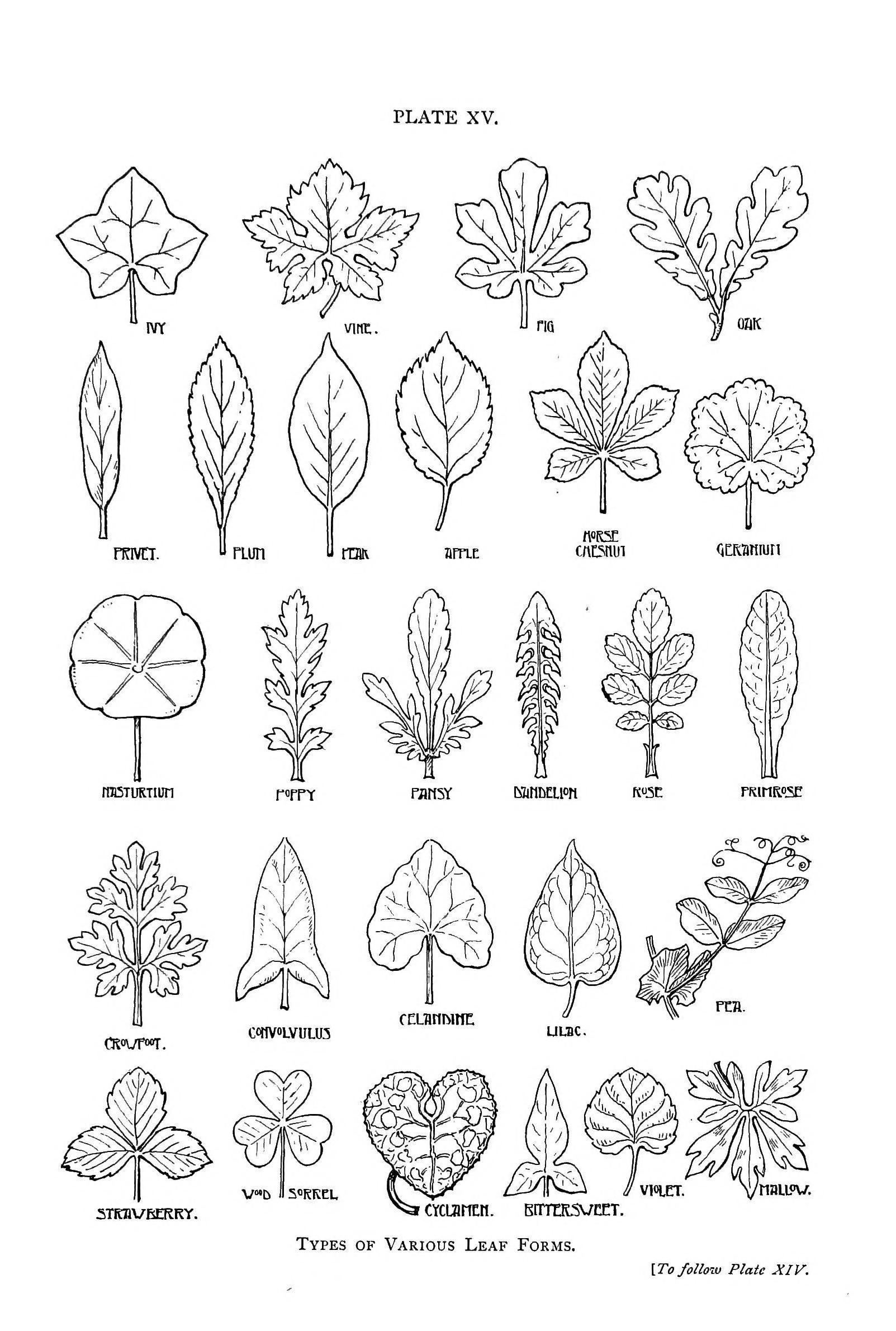 The 25 Best Leaf Shapes Ideas