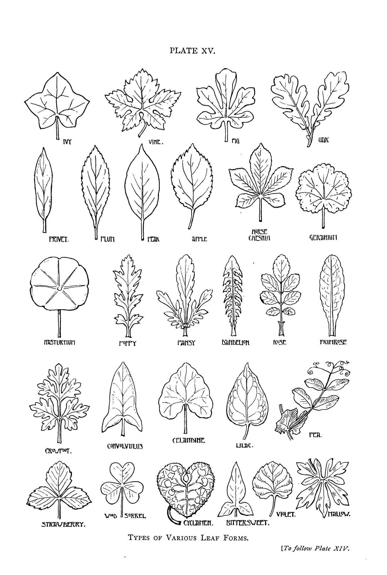 25 Unique Leaf Shapes Ideas