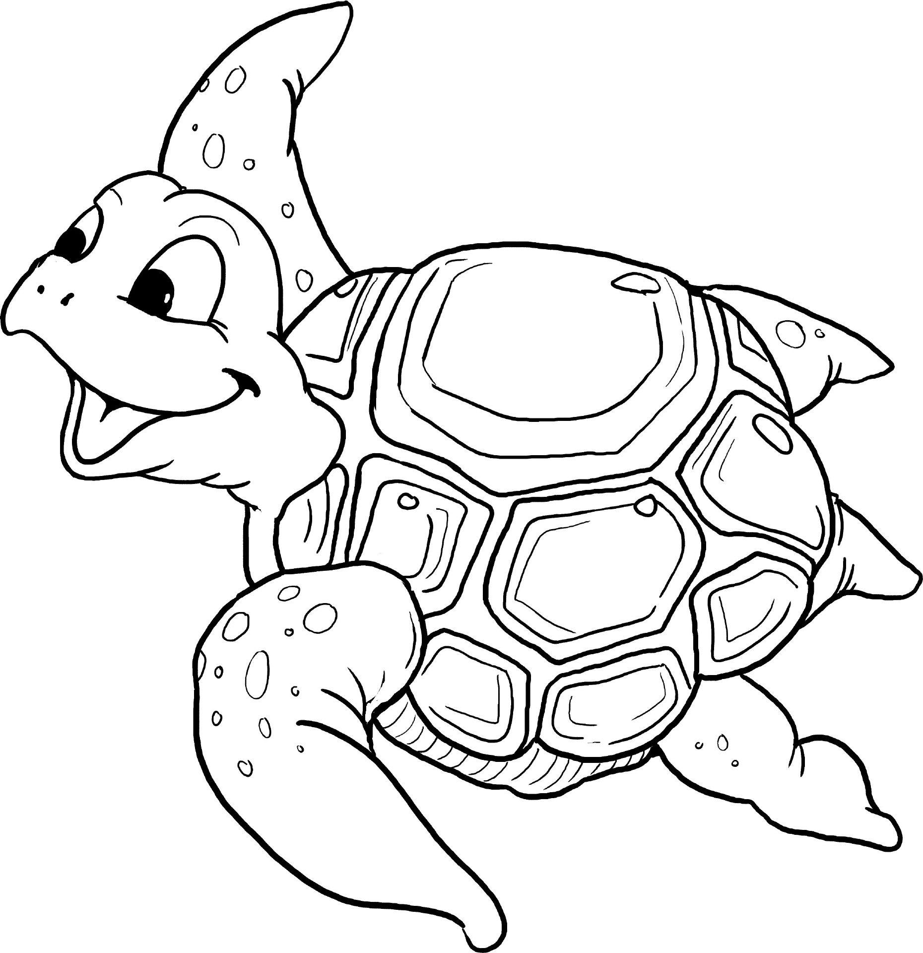 Schildkröte Malvorlage