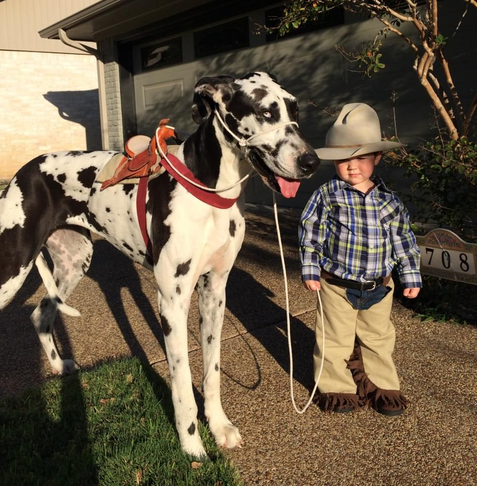 Toddler and Great Dane dog halloween costume. A cowboy and
