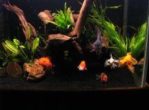 Beautiful goldfish tank! | Aquarium Envy | Pinterest ...