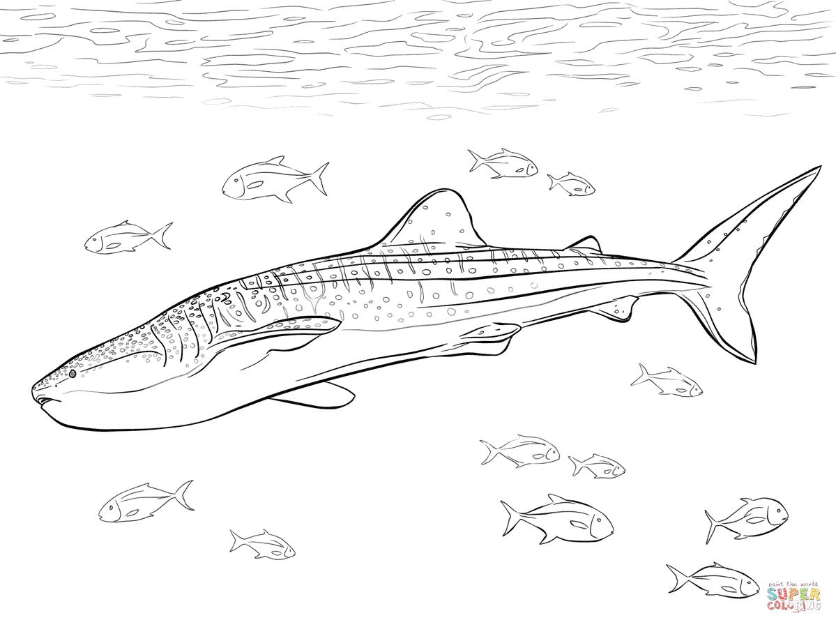 Realistic Whale Shark