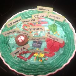 Plant Cell Diagram Project Plot For Julius Caesar Theron 39s 5th Grade Science Edible Cookie