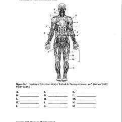 Skeleton Diagram For 4th Grade Light Fixture Wiring Diagrams Human Anatomy Labeling Worksheets Body Muscle Worksheet ...