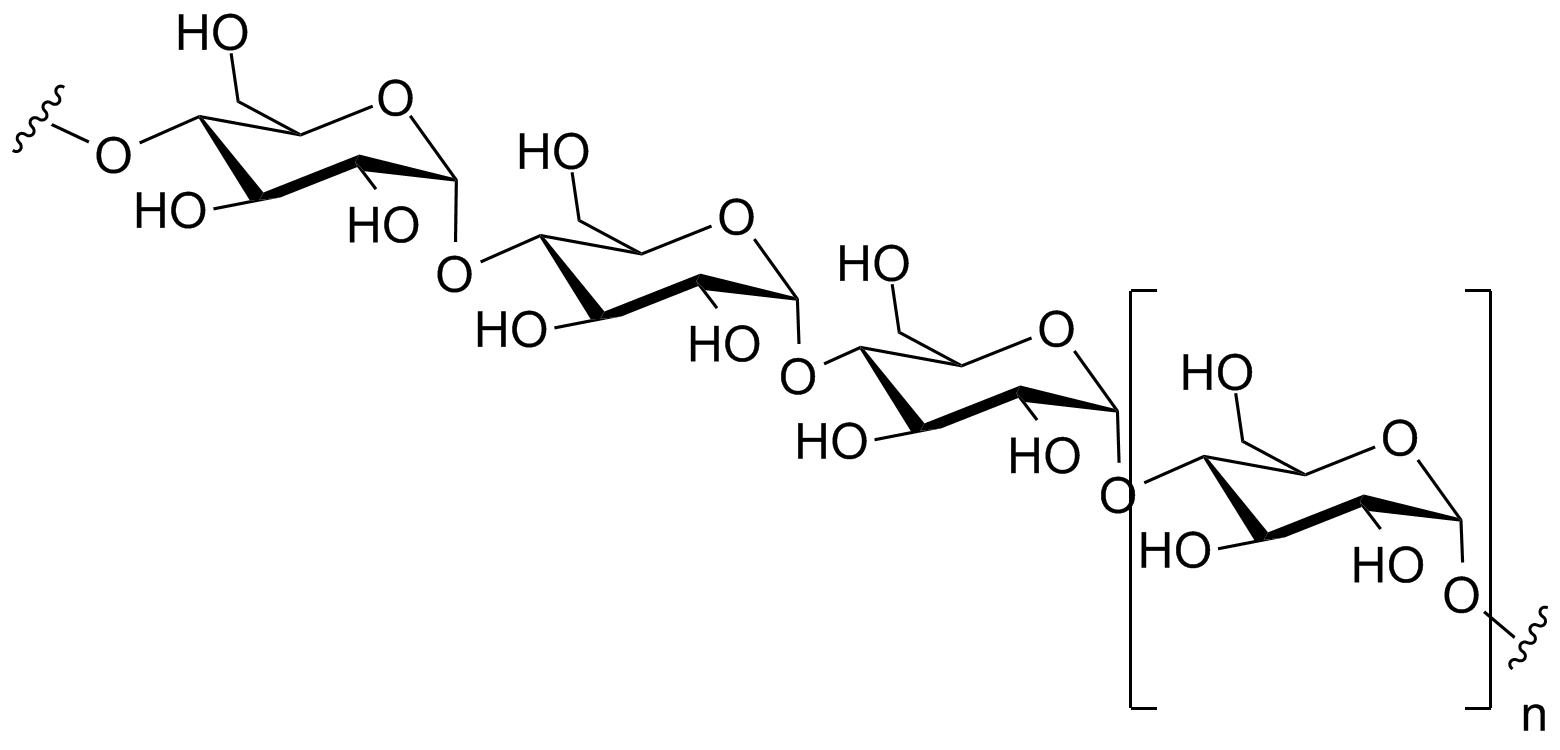 Polysaccharide, the polymer of charbohydrates