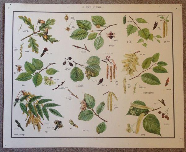 Macmillan School Educational Natural History Botany