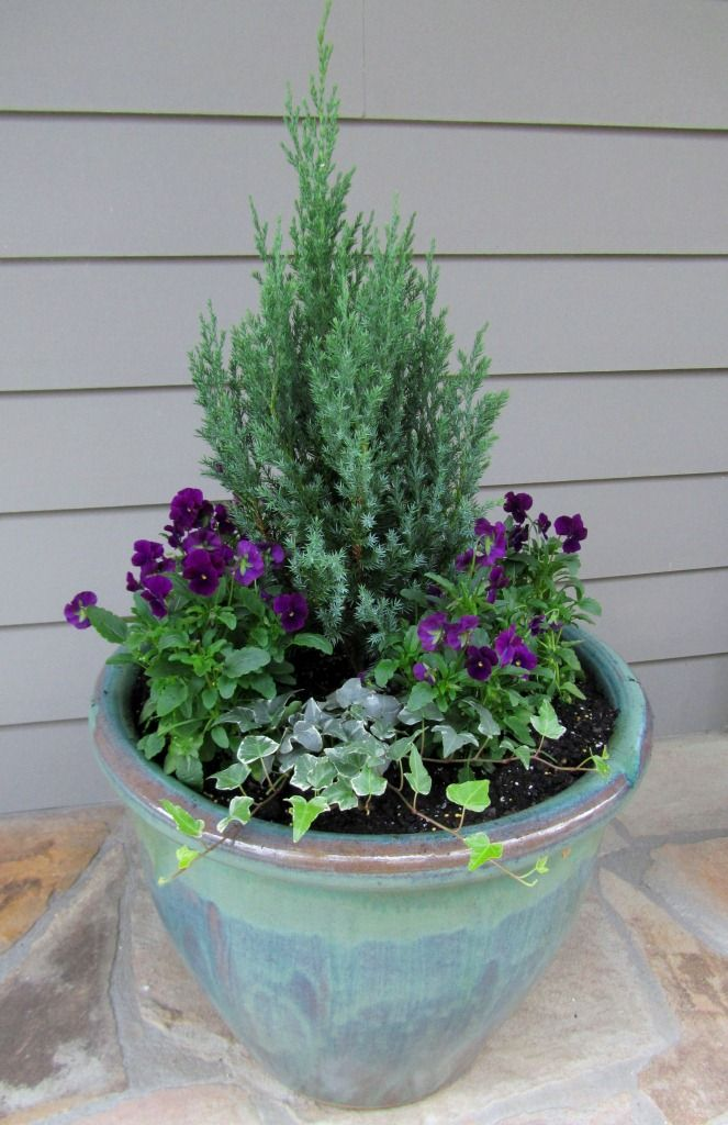 Converting Our Summer Containers To Winter Container Gardens