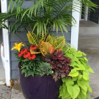 Late summer/early fall planter | fall planters | Pinterest ...