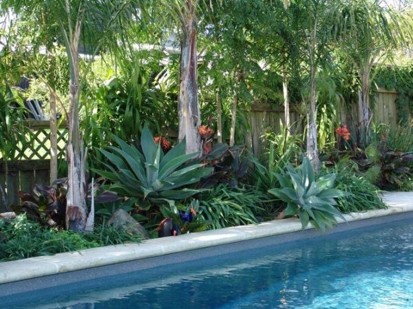 tropical pool landscaping
