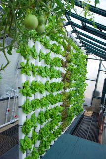 Vertical Aquaponics System Saving