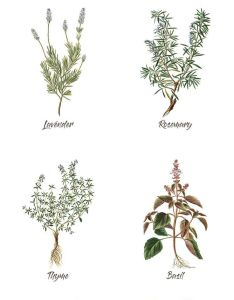 Budgeting also free set of spring herb printables herbs decorating and rh za pinterest