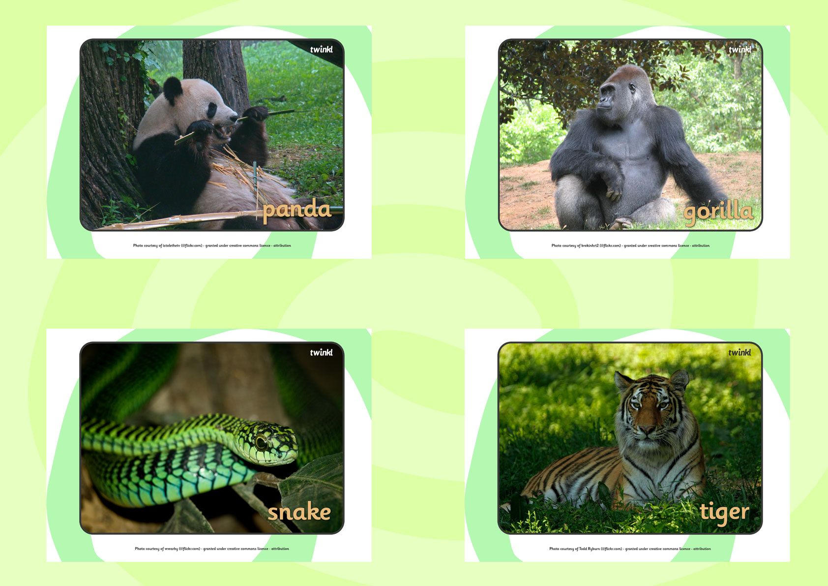 Twinkl Resources Gt Gt Rainforest Animals Display Photos Gt Gt Classroom Printables For Pre School