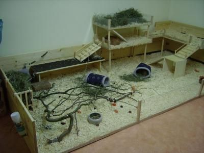 Awesome Ideas For Guinea Pig Hutch And Cages Guinea Pig Toys
