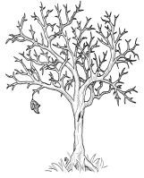 Autumn Fall Tree Without Leaves Coloring Page   DOVER ...